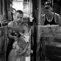Shearing with a legend